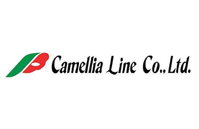 Camellia linea
